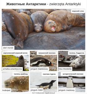 zwierzęta po rosyjsku Antarktyka