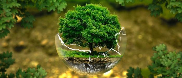 ochrona przyrody
