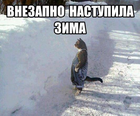 kot i zima